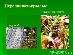 Перепончатокрылые: шмель земляной муравей