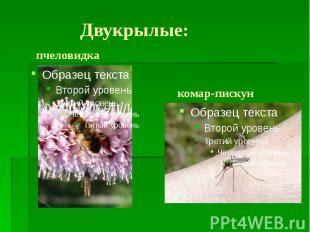 Двукрылые: пчеловидка комар-пискун