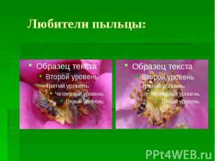 Любители пыльцы: