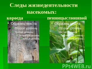 Следы жизнедеятельности насекомых: короеда пенницыслюнявой