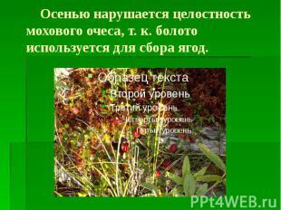 Осенью нарушается целостность мохового очеса, т. к. болото используется для сбор