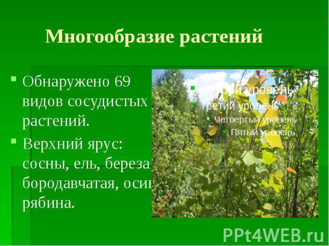 Многообразие растений Обнаружено 69 видов сосудистых растений. Верхний ярус: сосны, ель, береза бородавчатая, осина, рябина.