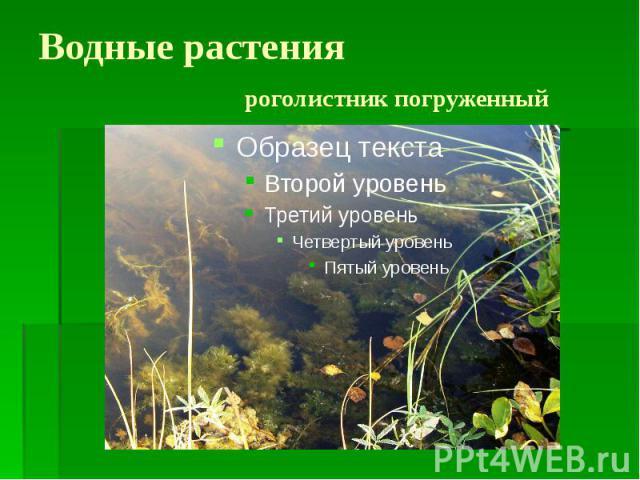 Водные растения роголистник погруженный