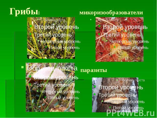 Грибы: микоризообразователи паразиты
