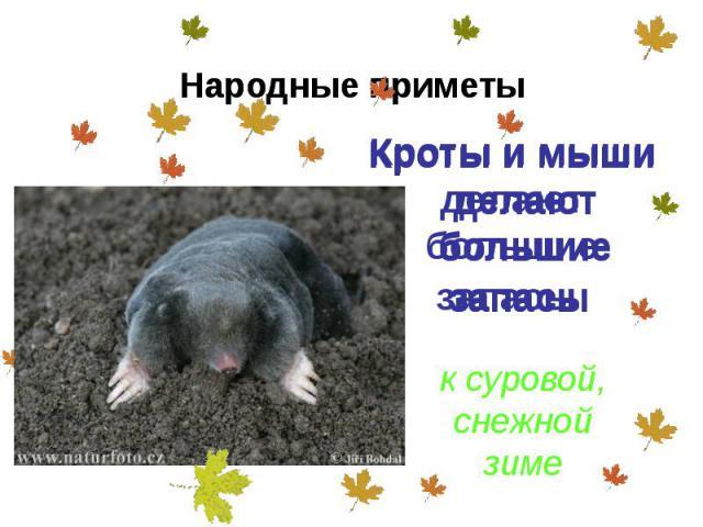 Кроты и мыши делают большие запасы Кроты и мыши делают большие запасы
