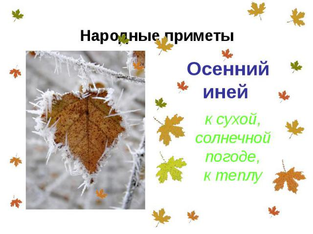 Осенний иней Осенний иней
