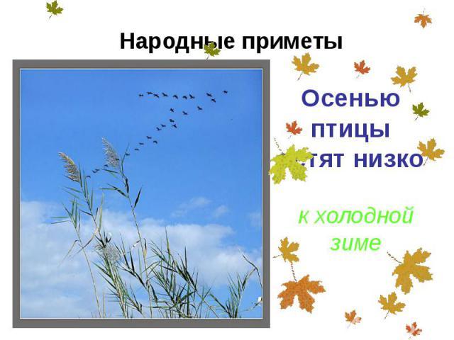 Осенью птицы летят низко Осенью птицы летят низко
