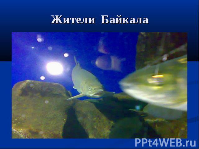 Жители Байкала