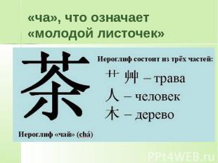 «ча», что означает «молодой листочек»