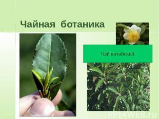 Чайная ботаника