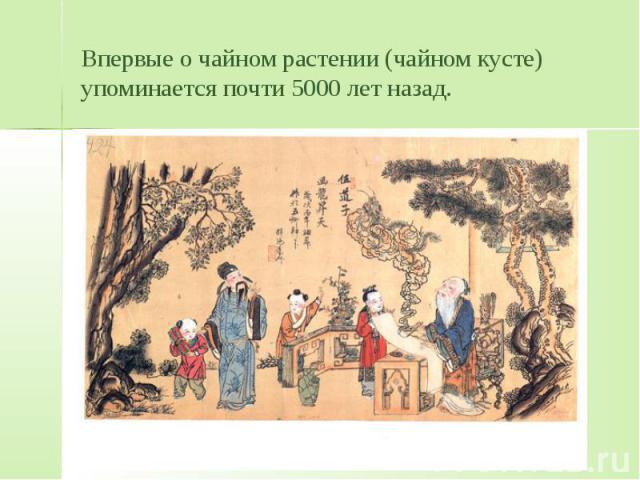 Впервые о чайном растении (чайном кусте) упоминается почти 5000 лет назад.