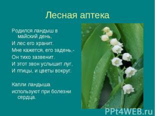 Родился ландыш в майский день, Родился ландыш в майский день, И лес его хранит.