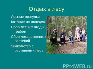 Лесные прогулки Лесные прогулки Катание на лошадях Сбор лесных ягод и грибов Сбо