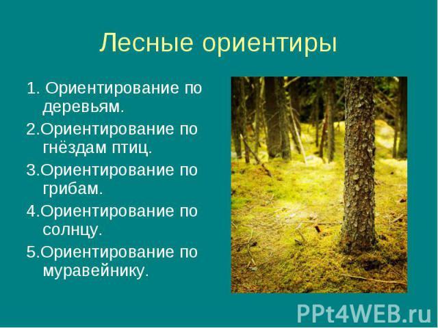 1. Ориентирование по деревьям. 1. Ориентирование по деревьям. 2.Ориентирование по гнёздам птиц. 3.Ориентирование по грибам. 4.Ориентирование по солнцу. 5.Ориентирование по муравейнику.