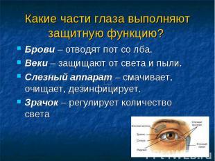 Какие части глаза выполняют защитную функцию? Брови – отводят пот со лба. Веки –