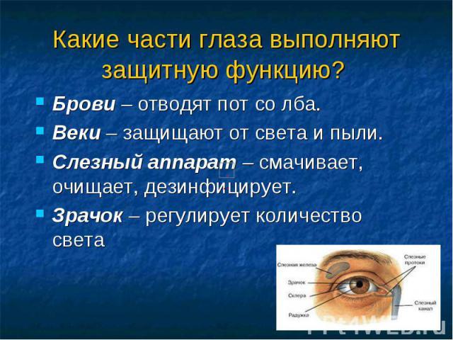 Какие части глаза выполняют защитную функцию? Брови – отводят пот со лба. Веки – защищают от света и пыли. Слезный аппарат – смачивает, очищает, дезинфицирует. Зрачок – регулирует количество света