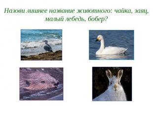 Назови лишнее название животного: чайка, заяц, малый лебедь, бобер?