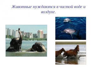 Животные нуждаются в чистой воде и воздухе.