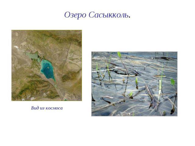 Озеро Сасыкколь.