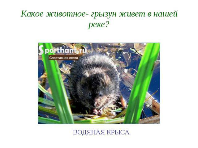Какое животное- грызун живет в нашей реке?