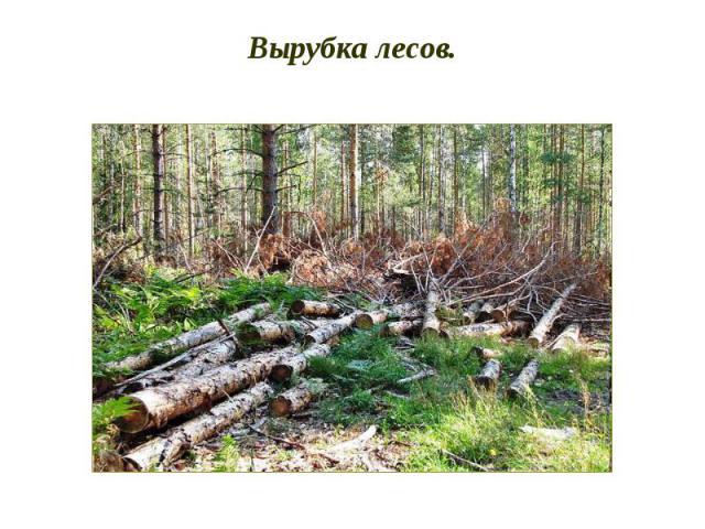 Вырубка лесов.