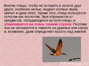 Многие птицы, чтобы не потерять в полете друг друга, особенно ночью, издают особ