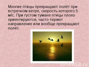 Многие птицы прекращают полёт при встречном ветре, скорость которого 5 м/с. При