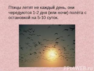 Птицы летят не каждый день, они чередуются 1-2 дня (или ночи) полёта с остановко