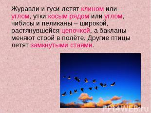 Журавли и гуси летят клином или углом, утки косым рядом или углом, чибисы и пели
