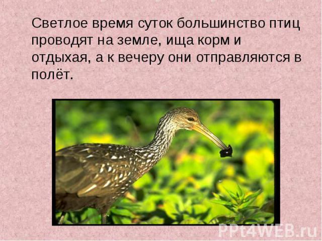 Светлое время суток большинство птиц проводят на земле, ища корм и отдыхая, а к вечеру они отправляются в полёт. Светлое время суток большинство птиц проводят на земле, ища корм и отдыхая, а к вечеру они отправляются в полёт.