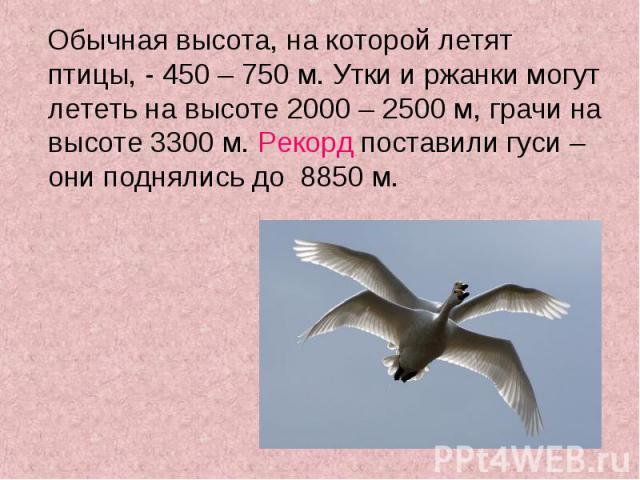 Обычная высота, на которой летят птицы, - 450 – 750 м. Утки и ржанки могут лететь на высоте 2000 – 2500 м, грачи на высоте 3300 м. Рекорд поставили гуси – они поднялись до 8850 м. Обычная высота, на которой летят птицы, - 450 – 750 м. Утки и ржанки …