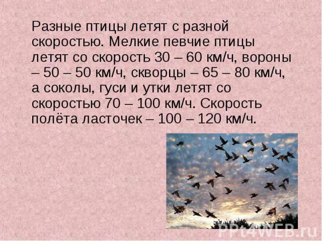 Разные птицы летят с разной скоростью. Мелкие певчие птицы летят со скорость 30 – 60 км/ч, вороны – 50 – 50 км/ч, скворцы – 65 – 80 км/ч, а соколы, гуси и утки летят со скоростью 70 – 100 км/ч. Скорость полёта ласточек – 100 – 120 км/ч. Разные птицы…