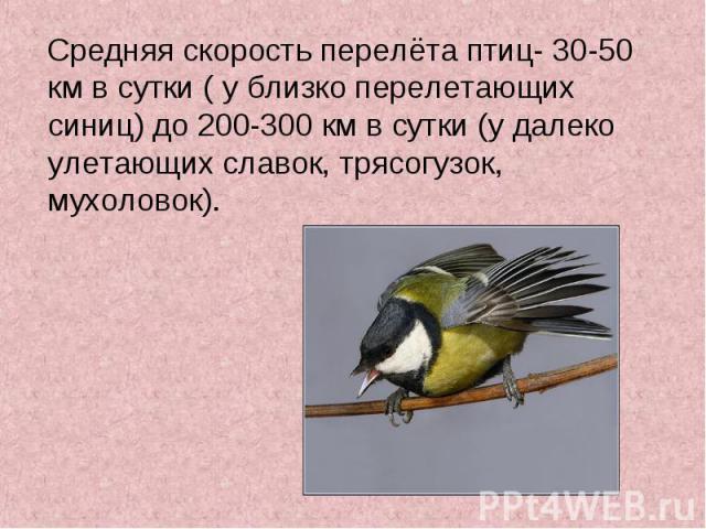 Средняя скорость перелёта птиц- 30-50 км в сутки ( у близко перелетающих синиц) до 200-300 км в сутки (у далеко улетающих славок, трясогузок, мухоловок). Средняя скорость перелёта птиц- 30-50 км в сутки ( у близко перелетающих синиц) до 200-300 км в…
