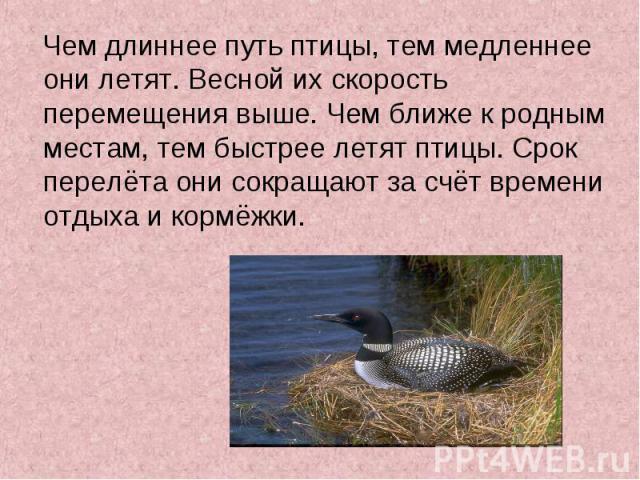 Чем длиннее путь птицы, тем медленнее они летят. Весной их скорость перемещения выше. Чем ближе к родным местам, тем быстрее летят птицы. Срок перелёта они сокращают за счёт времени отдыха и кормёжки. Чем длиннее путь птицы, тем медленнее они летят.…