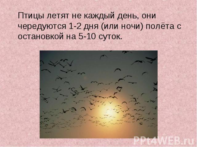 Птицы летят не каждый день, они чередуются 1-2 дня (или ночи) полёта с остановкой на 5-10 суток. Птицы летят не каждый день, они чередуются 1-2 дня (или ночи) полёта с остановкой на 5-10 суток.