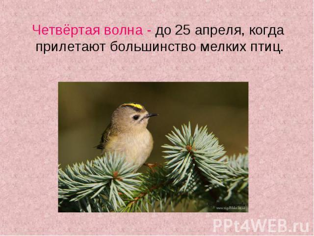Четвёртая волна - до 25 апреля, когда прилетают большинство мелких птиц. Четвёртая волна - до 25 апреля, когда прилетают большинство мелких птиц.