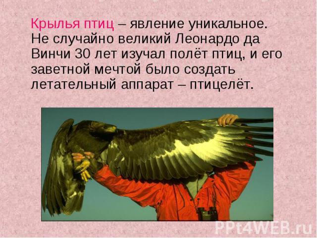 Крылья птиц – явление уникальное. Не случайно великий Леонардо да Винчи 30 лет изучал полёт птиц, и его заветной мечтой было создать летательный аппарат – птицелёт. Крылья птиц – явление уникальное. Не случайно великий Леонардо да Винчи 30 лет изуча…