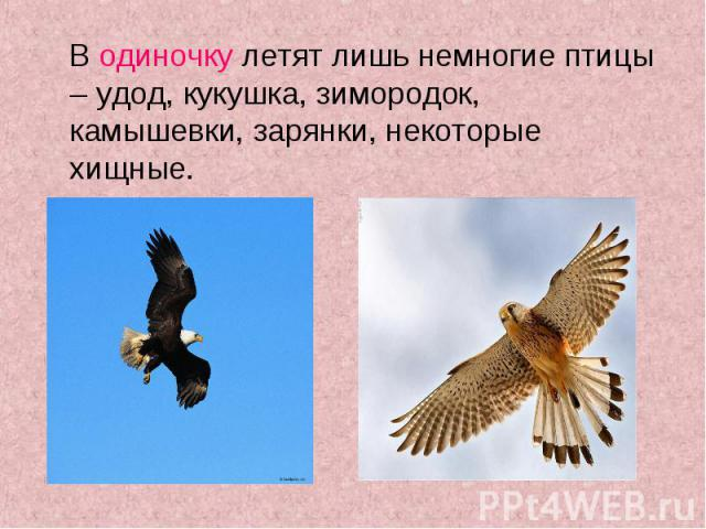 В одиночку летят лишь немногие птицы – удод, кукушка, зимородок, камышевки, зарянки, некоторые хищные. В одиночку летят лишь немногие птицы – удод, кукушка, зимородок, камышевки, зарянки, некоторые хищные.