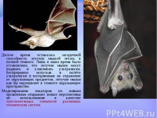 Долгое время оставалась загадочной способность летучих мышей летать в полной тем