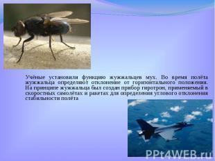 Учёные установили функцию жужжальцев мух. Во время полёта жужжальца определяют о