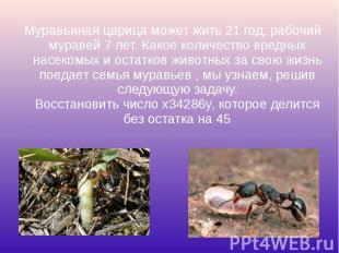 Муравьиная царица может жить 21 год, рабочий муравей 7 лет. Какое количество вре