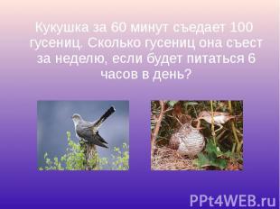 Кукушка за 60 минут съедает 100 гусениц. Сколько гусениц она съест за неделю, ес