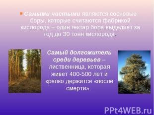 Самыми чистымиявляются сосновые боры, которые считаются фабрикой кислорода