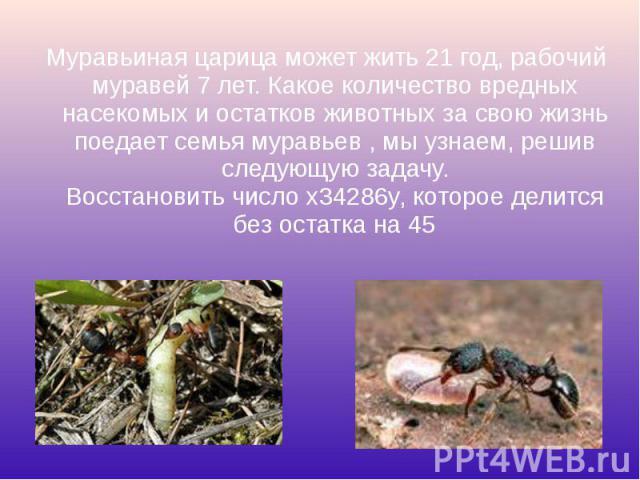 Муравьиная царица может жить 21 год, рабочий муравей 7 лет. Какое количество вредных насекомых и остатков животных за свою жизнь поедает семья муравьев , мы узнаем, решив следующую задачу. Восстановить число x34286y, которое делится без остатка на 4…
