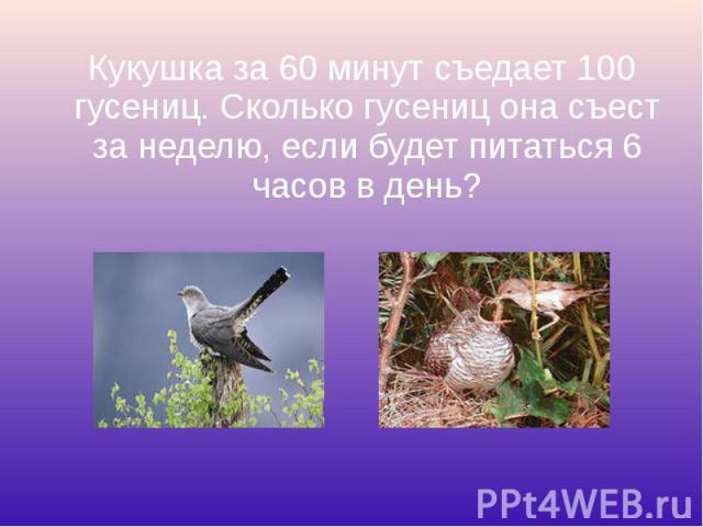Кукушка за 60 минут съедает 100 гусениц. Сколько гусениц она съест за неделю, если будет питаться 6 часов в день? Кукушка за 60 минут съедает 100 гусениц. Сколько гусениц она съест за неделю, если будет питаться 6 часов в день?