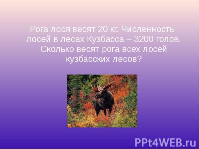 Рога лося весят 20 кг. Численность лосей в лесах Кузбасса – 3200 голов. Сколько весят рога всех лосей кузбасских лесов?