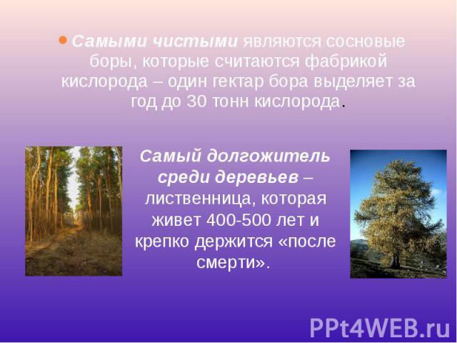 Самыми чистымиявляются сосновые боры, которые считаются фабрикой кислорода – один гектар бора выделяет за год до 30 тонн кислорода. Самыми чистымиявляются сосновые боры, которые считаются фабрикой кислорода – один гектар бора выделяет за…