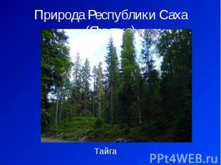 Природа Республики Саха (Якутия) Тайга