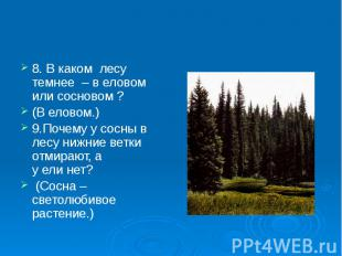 8. В каком лесу темнее – в еловом или сосновом ? 8. В каком лесу темнее – в елов