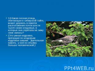 14.Какая лесная птица, обитающая в сибирской тайге, может держать в памяти распо